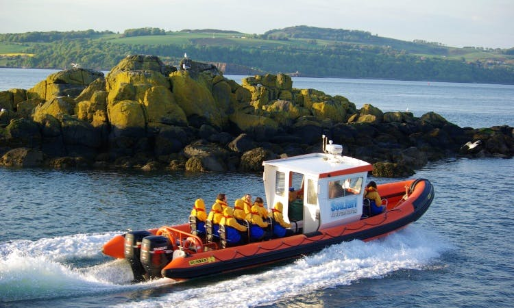 Guided Wildlife Watching Tour On 35 feet High Speed RIB in Edinburgh, UK