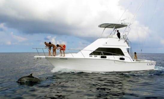 Dolphin Sightseeing & Snorkeling Charters In Kailua-kona