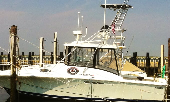 31' Luhrs Sport Fisherman Fishing Charter in Point Lookout