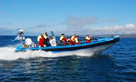 Passenger Boat Rental In Húsavík
