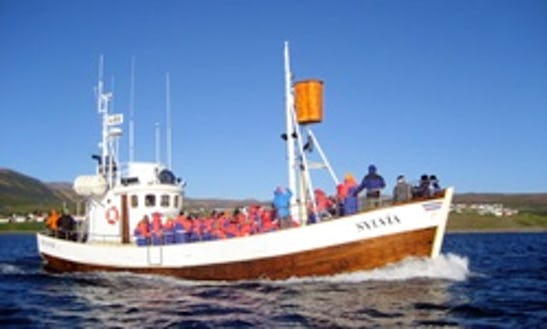 60-person Passenger Boat Charter In Husavik Northeast, Iceland