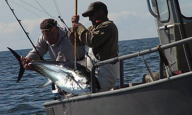 Striper and Tuna Fishing In Newbury, Massachusetts With Captain Jack