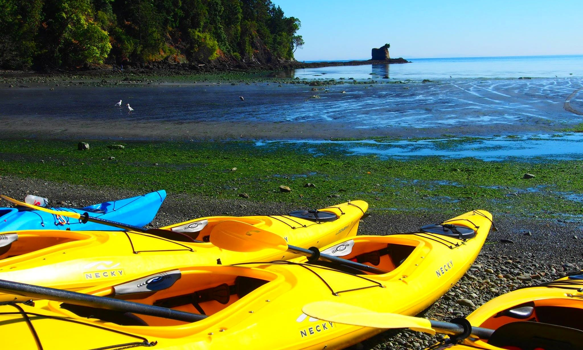 Explore Port Angeles, Washington on a Tandem Kayak