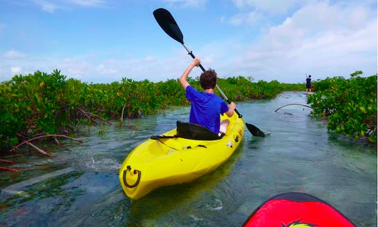 Gudied Tour By Kayak Through The Mandgroves