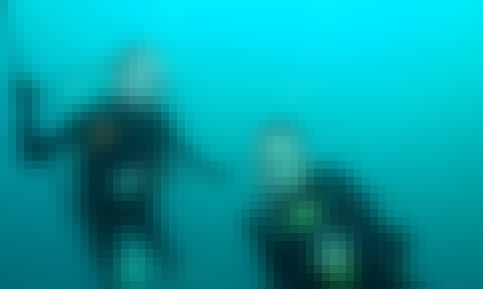Scuba Diving Trips in Paihia