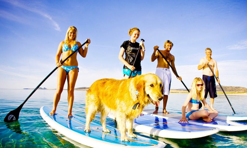 SUP and Surfboard Lessons, Tours, & Hire in Matakana, New Zealand