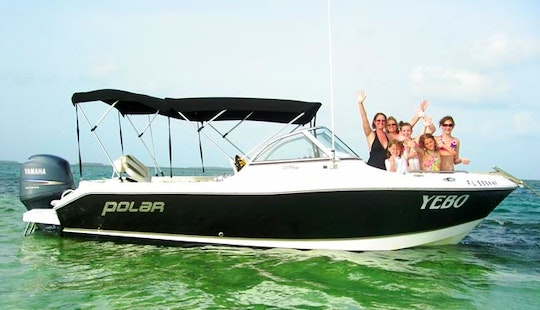 Dolphin Watching Charter On 17ft Bowrider In Key West, Florida
