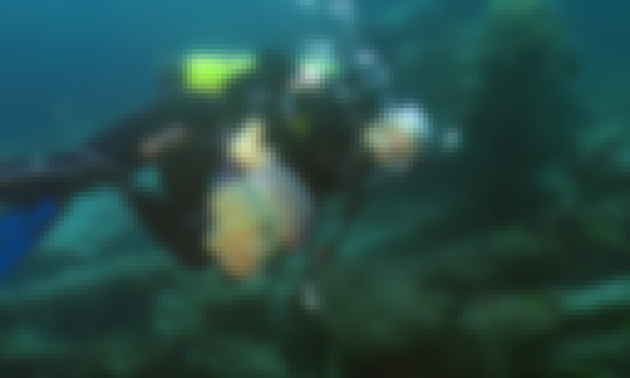 Diving Courses and Charters in Kuching