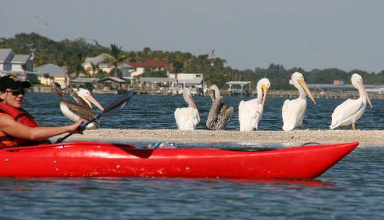 Kayak And Sup Tours In Sebastian Florida