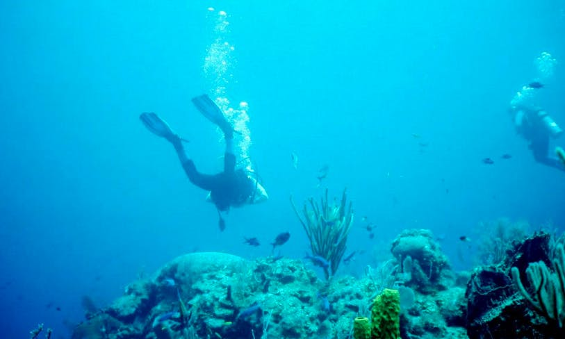Diving Charter in Placencia Belize