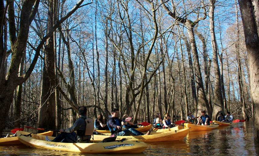 Kayak Swamp Tour in New Orleans, Louisiana