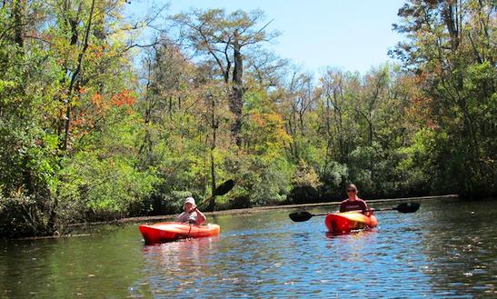 Single Or Tandem Kayak Rental In Southport