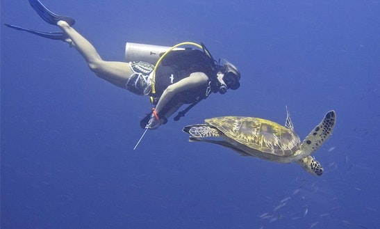 Dive, Explore, Experience, El Nido Palawan