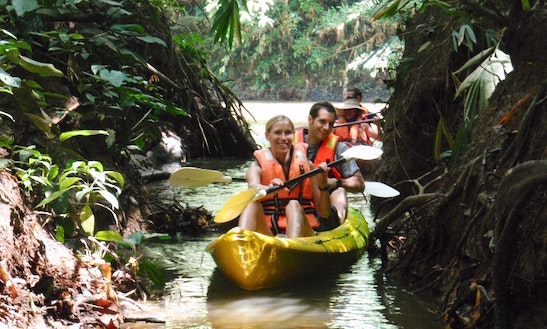 Rainforest Kayaking In Kunching, Malaysia