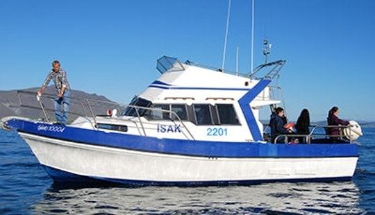 Private Tour Boat For 16 Person In Reykjavík