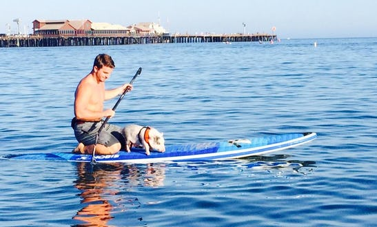 A Large Fleet Of Sup Available For Rent In Santa Barbara, California