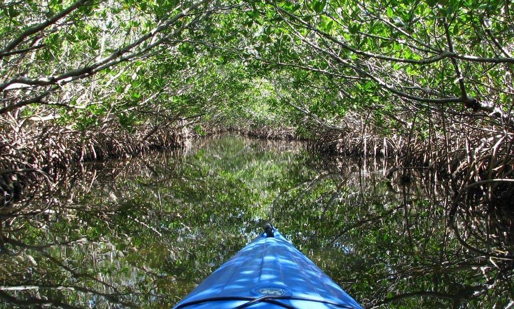 Mangrove Kayak Tour in West Bay