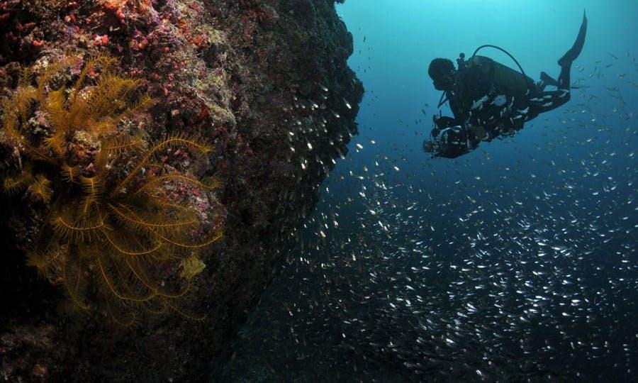 Charter Dive Boat 'The Explorer'  in Mumbai