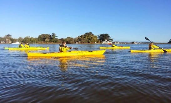 Kayak And Sup Tours In Eureka, Ca