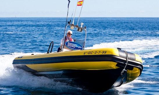 Valiant Rib Charters In Puerto Calero
