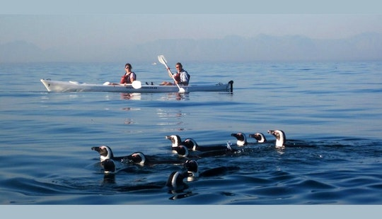 Kayak In Cape Town