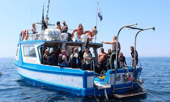 Dive Boat In Girona