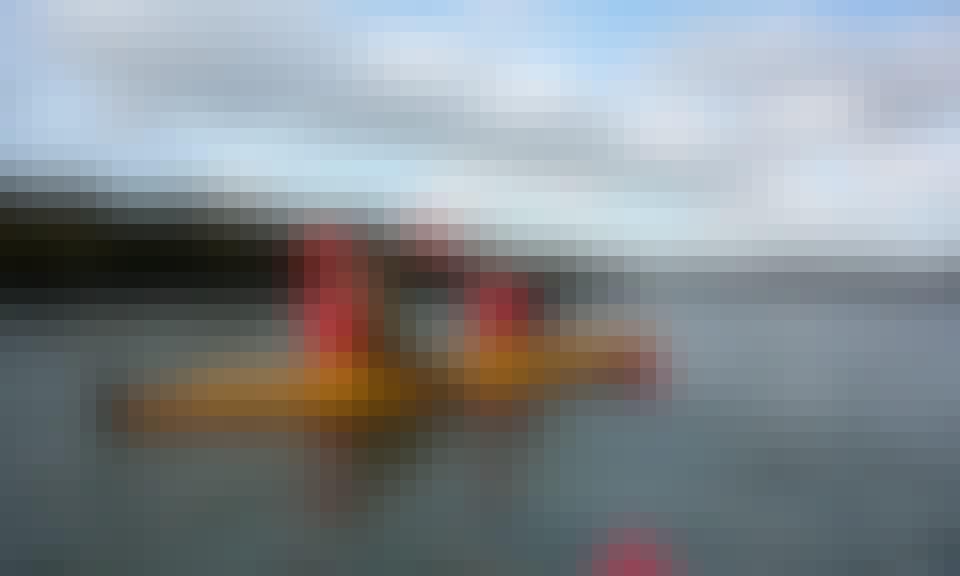 Kayak Trips in Auckland, New Zealand