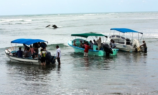Whale Watches In Puntarenas, Costa Rica
