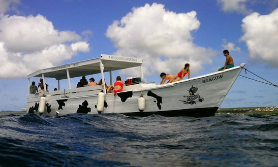 Guided Snorkel Trip  Boat In Kralendijk