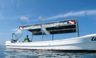 Enjoy experience of diving with professional In Zihuatanejo, Mexico