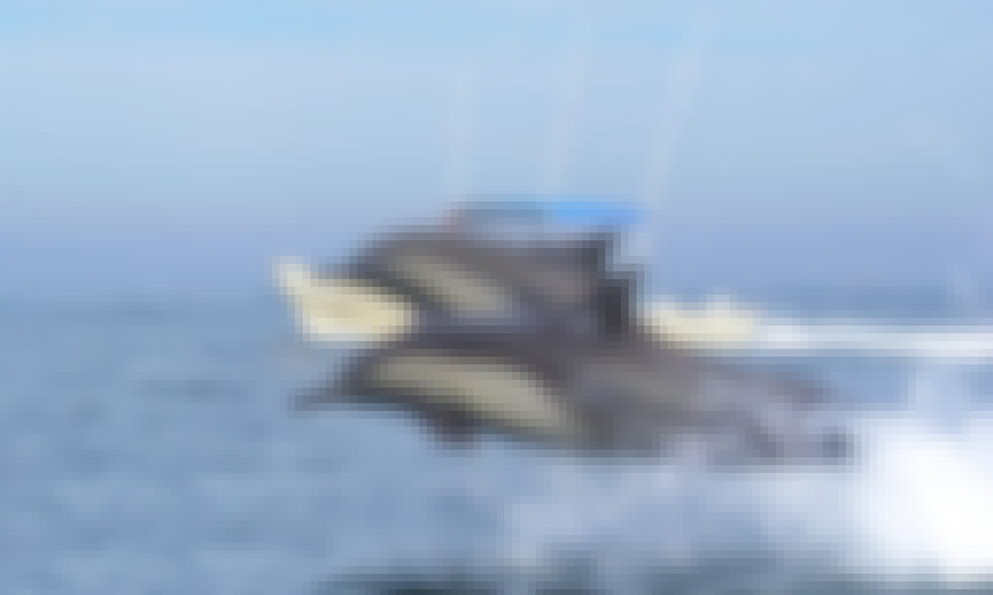 Book a Whale Watching & Snorkeling Ecotours in Mazatlán, Mexico
