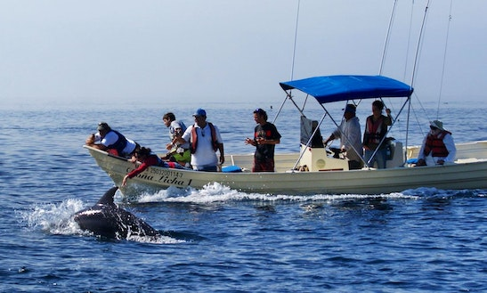 Dolphins, Whale Watching & Snorkeling Ecotours In Mazatlán