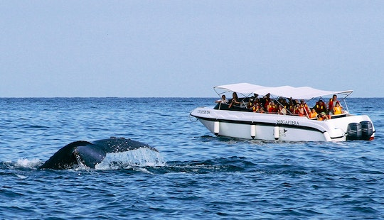 Whale Watching Tour Boat In Organos, Peru
