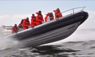 RIB Tour and Rental In Cape Town
