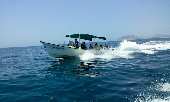 Boat Dives In Cabo Pulmo