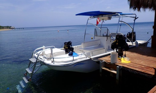 Diving & Snorkeling Trips In West Bay