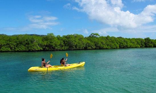 Kayak Adventure Tour On Henley Cay