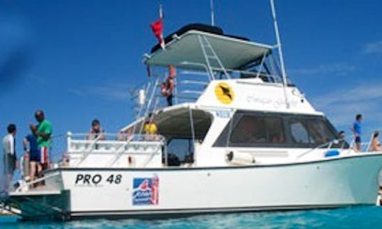 Multi Day Diving Charter For 8 Persons In Willemstad, Curacao