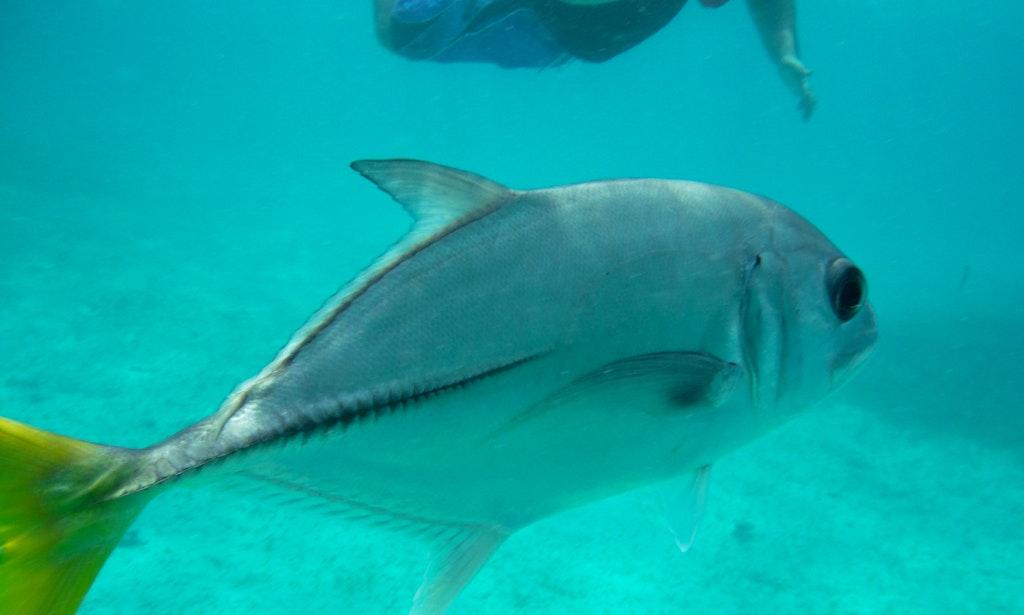 24 39 bass boat charter in corozal belize getmyboat for Belize fishing charters