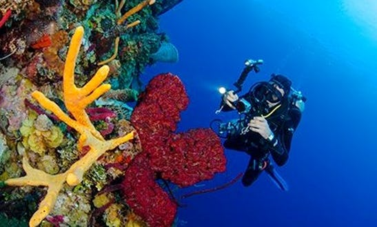 Cave, Technical & Recreational Diving In Santo Domingo