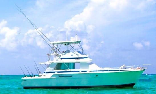 Exciting Fishing Trip On 42' Bertram Sport Fisherman In Punta Cana, Dominican Republic