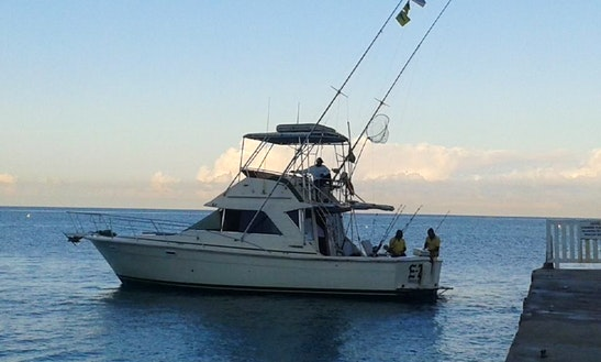 Sport Fisherman Fishing Charter In Montego Bay, Jamaica