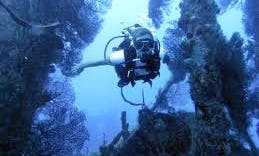 Discover Scuba Diving in Holetown, Barbados