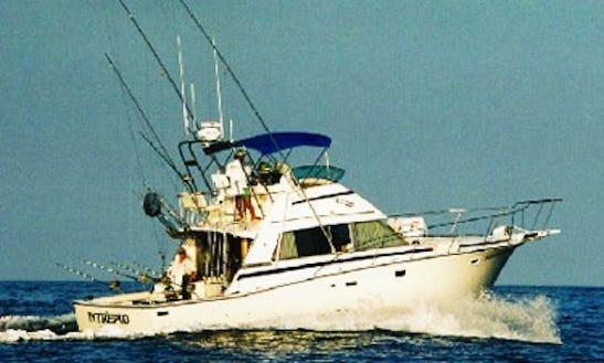 Charter On 42ft Bertram Sport Fishing Yacht In North Kona, Hawaii