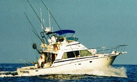 Charter On 42ft Bertram Sport Fishing Yacht In North Kona, Hawaii
