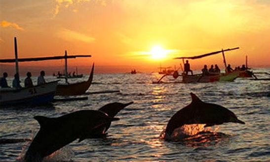 Dolphin Watching Tour In Indonesia
