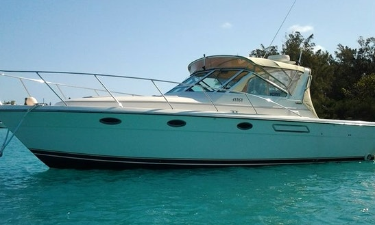 Under The Sea Charters