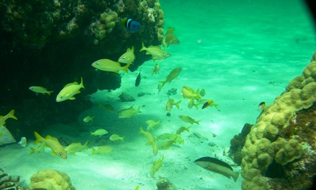 39 deep quest 39 fishing charter snokeling trips in cayman for Deep sea fishing grand cayman