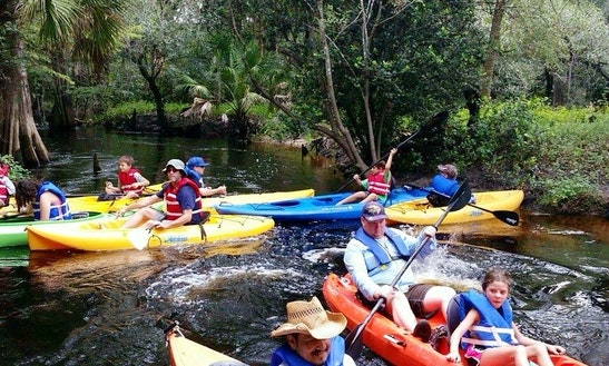 Guided Kayak Eco-tours In Naples, Florida