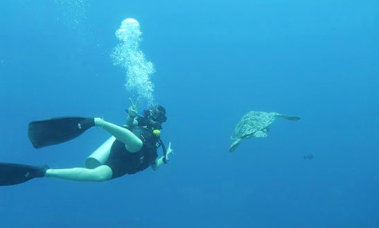 Diving Trips To The Best Dive Sites In West Nusa Tenggara, Indonesia